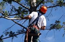 Insurance for Arborists